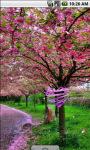 Sakura Flowers Scenery Live Wallpaper screenshot 3/4