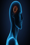 Astounding Facts about the human body screenshot 3/5