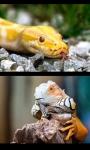 Reptiles screenshot 1/4