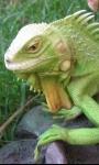 Reptiles screenshot 3/4