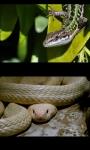 Reptiles screenshot 4/4