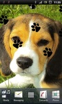 Cute Beagle Puppy Live Wallpaper screenshot 1/3
