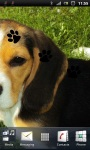 Cute Beagle Puppy Live Wallpaper screenshot 3/3