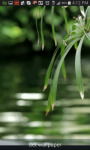 Scenic Live Pond and Nature Reserve screenshot 3/3