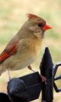 Humming Bird live wallpaper screenshot 2/3