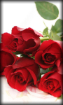 Roses Live Wallpaper Rose screenshot 3/6