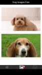 Dog Images Free screenshot 2/6