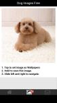Dog Images Free screenshot 3/6
