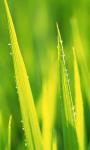 Spring Grass Live Wallpaper screenshot 1/3