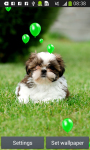 Puppies Live Wallpapers screenshot 2/6