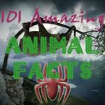 101 Amazing Animal Facts screenshot 1/3