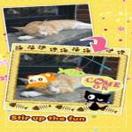 My Cat Photo Sticker Lite screenshot 2/5