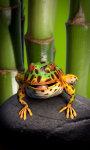 Toad live wallpaper Free screenshot 3/5