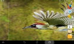 Amazing Wild Nature screenshot 3/6