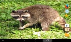 Amazing Wild Nature screenshot 5/6