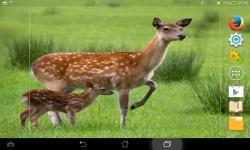 Amazing Wild Nature screenshot 6/6