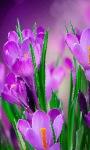 Violet Flowers Live Wallpaper screenshot 3/3