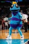Charlotte Hornets Fan screenshot 1/3