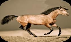 HQ Horses Live Wallpaper screenshot 3/4