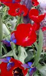 Waving Tulips  and Butterflies screenshot 1/3