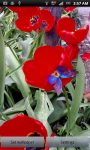 Waving Tulips  and Butterflies screenshot 2/3