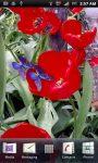 Waving Tulips  and Butterflies screenshot 3/3