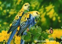 Very Cute Bird Wallpaper screenshot 1/6
