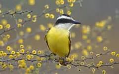 Very Cute Bird Wallpaper screenshot 4/6