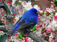 Very Cute Bird Wallpaper screenshot 5/6