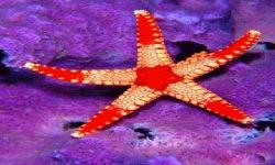 Starfish Shine Live Wallpaper screenshot 2/3