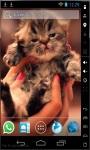 Cute Little Kitty Live Wallpaper screenshot 1/2