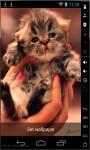 Cute Little Kitty Live Wallpaper screenshot 2/2