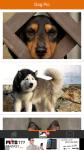 Dog Pic screenshot 2/6