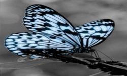 Black White Butterfly Live Wallpaper screenshot 2/3