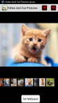 Kitten And Cat Pictures screenshot 1/4