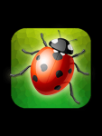 Garden Bug Smasher screenshot 3/3