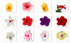 Hibiscus Flowers Onet Classic Game screenshot 3/3