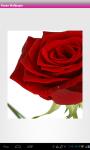 Roses Wallpaper screenshot 3/6