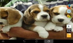 Ultimate Puppies Live Wallpaper screenshot 5/6