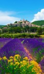 Lavender HD Wallpaper - Mindblowing screenshot 2/4