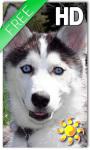 Puppy Husky Live Wallpaper screenshot 1/2