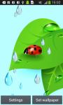 Ladybug Live Wallpapers screenshot 1/6