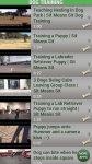 How to Train Your Dog Free screenshot 6/6