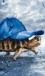 Funny Turtle Live Wallpaper screenshot 1/3