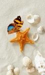 Butterfly Shell Live Wallpaper screenshot 1/3