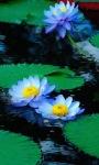 Blue Lotus Live Wallpaper screenshot 1/3