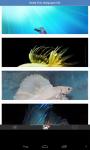 Betta Fish Wallpaper HD screenshot 2/3