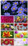 Sea Of Flowers HD screenshot 1/6
