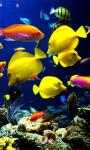 Amazing Fish in the sea images HD wallpaper screenshot 1/6
