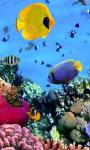 Amazing Fish in the sea images HD wallpaper screenshot 2/6